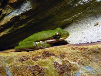 Green Frog by ceemdee