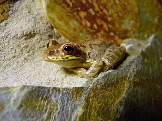 Brown Frog by ceemdee