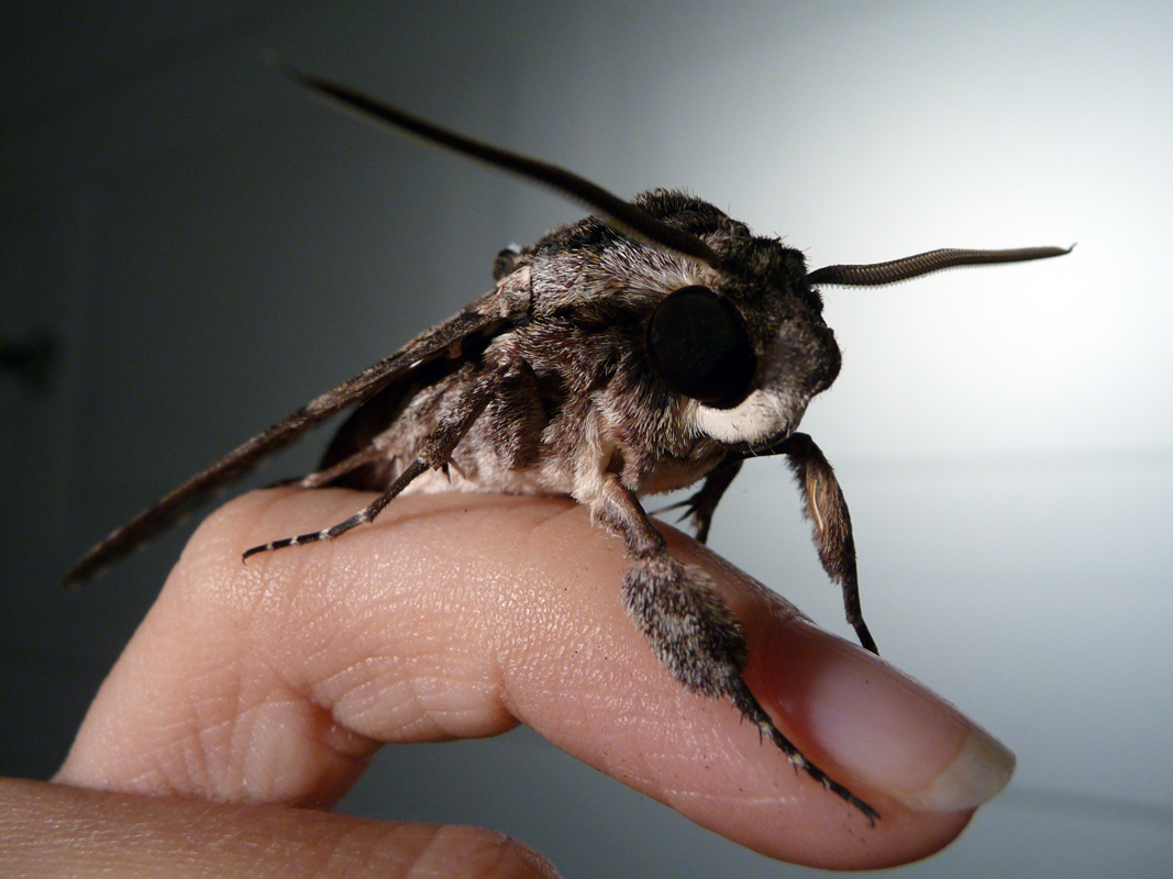 Moth by ceemdee