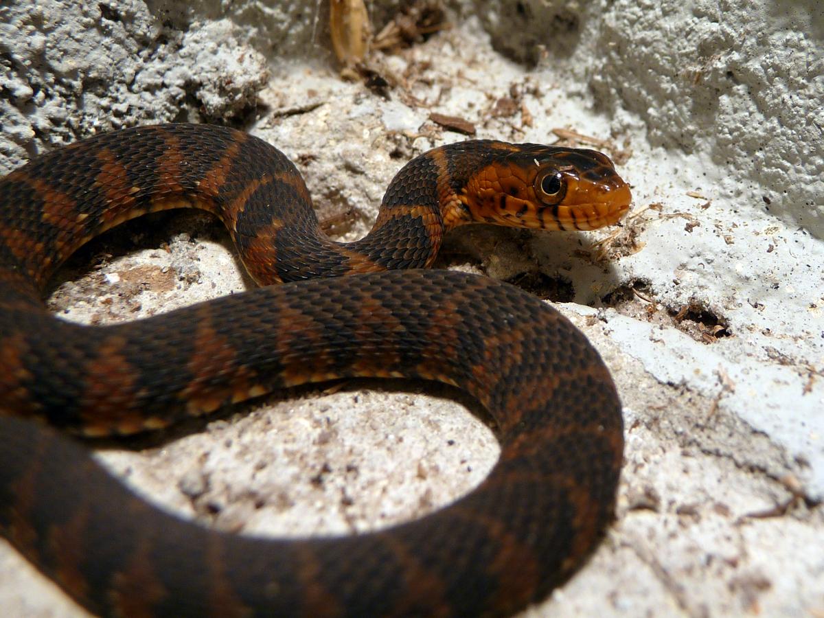Snake by ceemdee