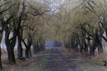 Willow alley by deathender