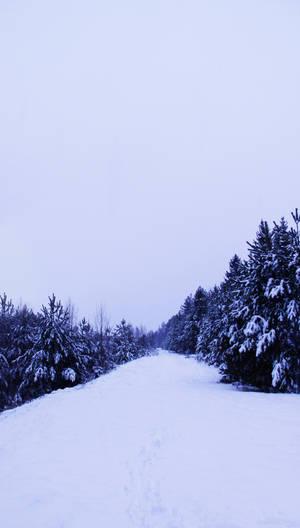 winter path trees stock