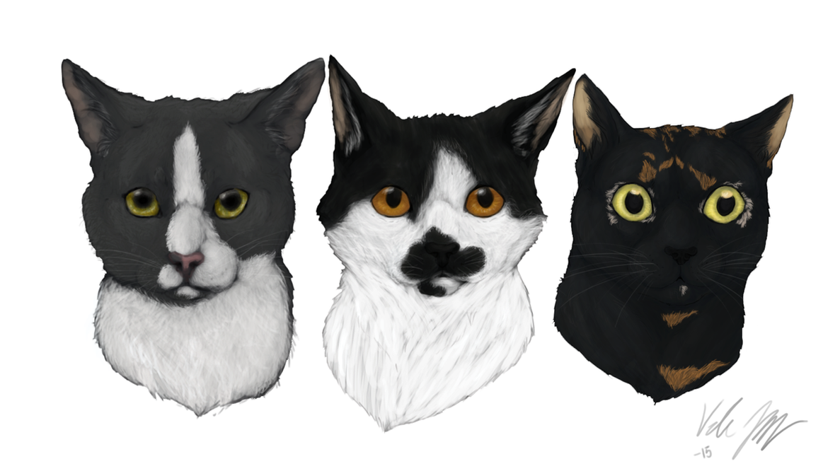 Cat trio by paniikkikohtaus