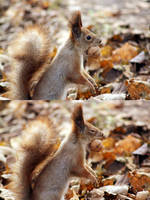 Squirrels are love by Mahovaolga
