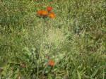 Wild Flowers Edit