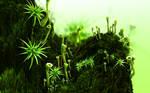 Organic Ambience