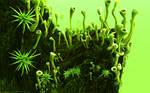 Organic Ambience Version 2