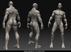 peer anatomy by shahbazh
