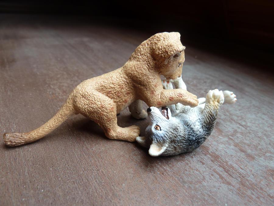 wolf vs. lion 1...