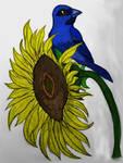 Blue Bird on a Sunflower
