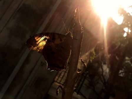 Morning Glory by riyad007