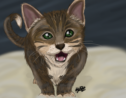 Tupac the kitty