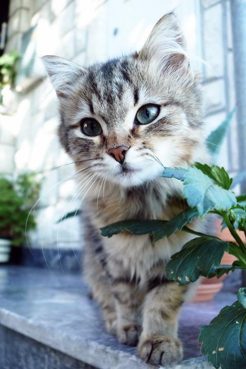 Cat by Natasek