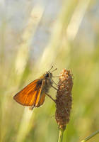Motylek 6 by BogdanCh