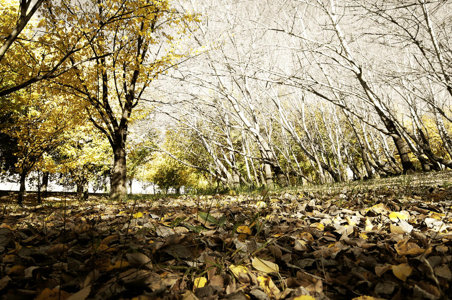 Leaves on path by Chimpjnr