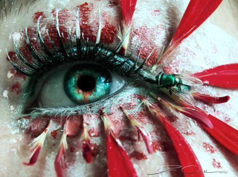 Fly in my eye