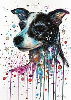 Portrait of a crazy dog