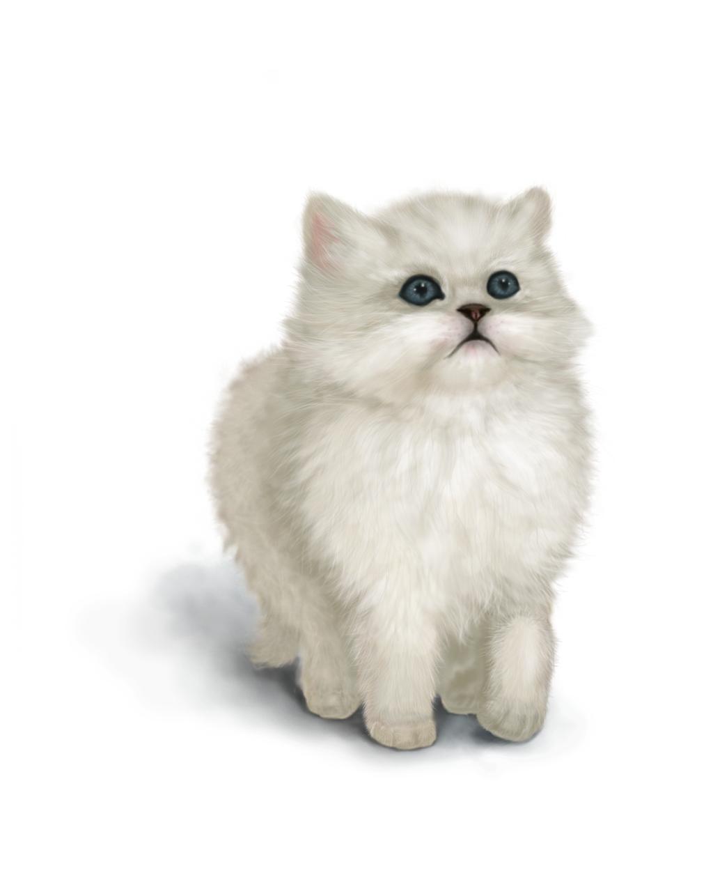 Curious Kitten by anastasia0829