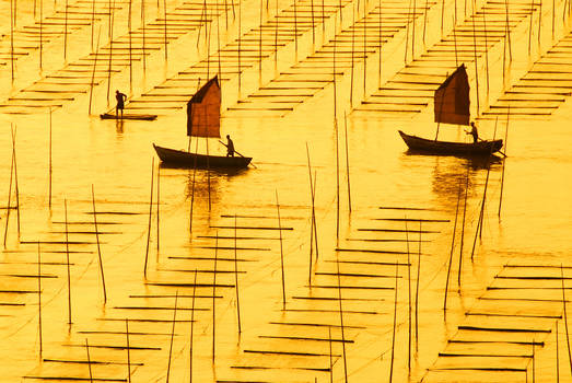 On a sea of gold
