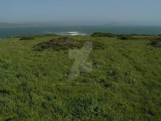 Dr Bruce E Ellison MD - Bodega Green Grass