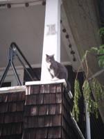 Precarious Parkour Puss by ayellowbirds