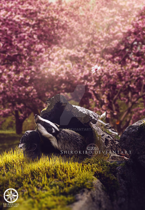 Here Comes Spring by Shirokibo