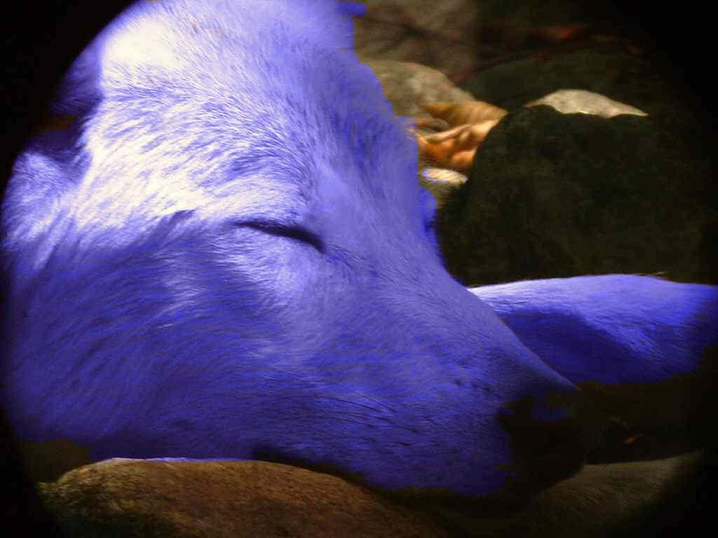 Bleu fenrir