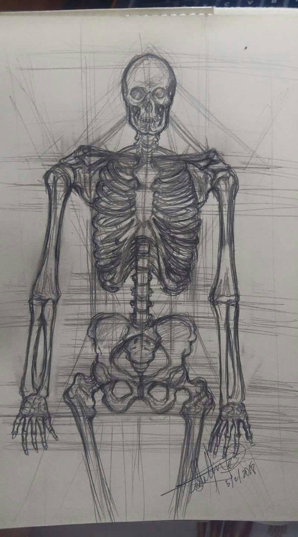 skeletal study by 6-Pence