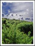 Gorse Hill by Ballisticvole