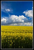 Yellow by Ballisticvole