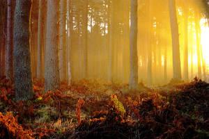 Tentsmuir Sunrise by Ballisticvole