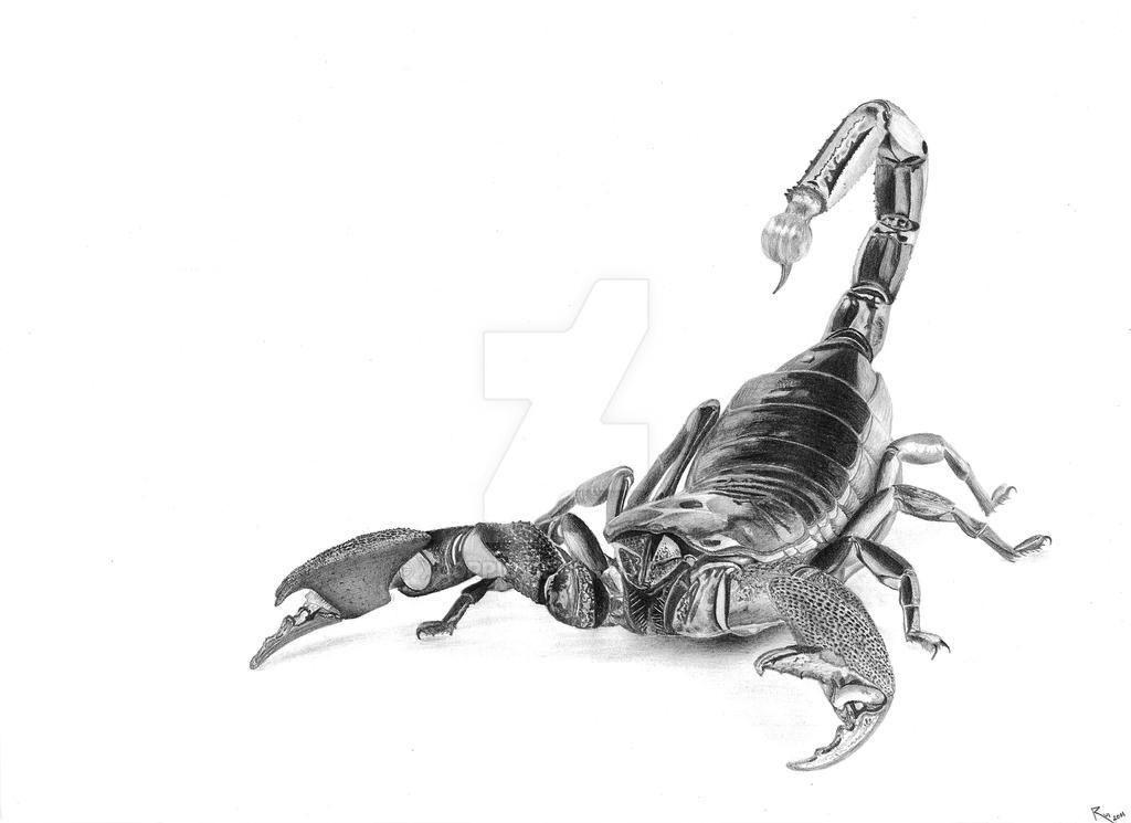 .the.scorpion. by xc0rpio