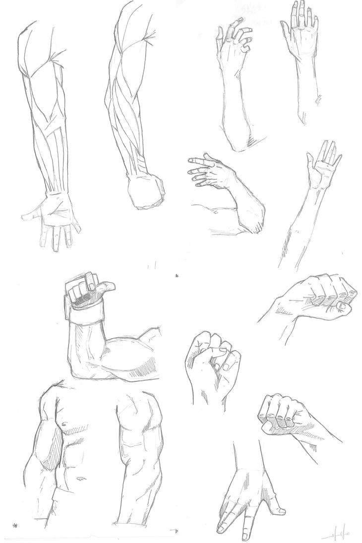 Sketch arms and hands by Marcaovmo on DeviantArt