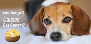 Dog Health: Does Omega 3 Causes Dog Cancers?