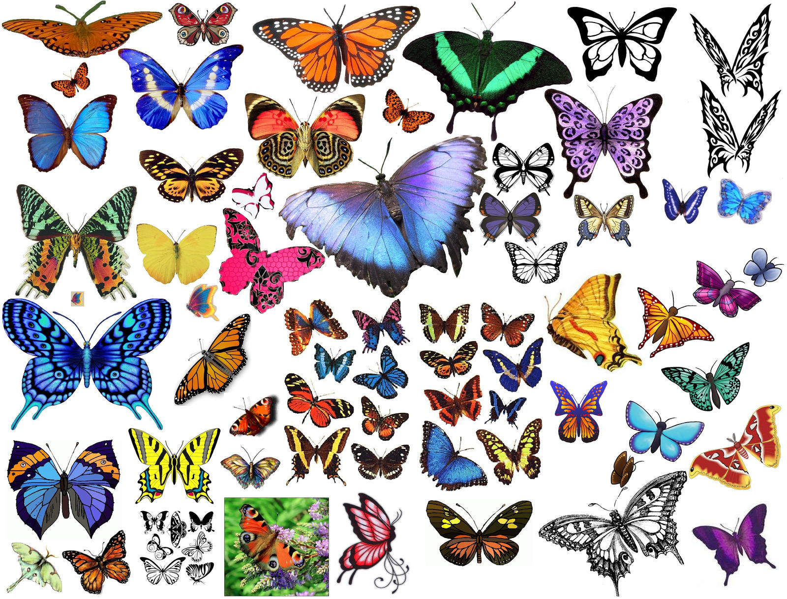 Free drawings of butterflies pics of butterflies free drawings of butterflies