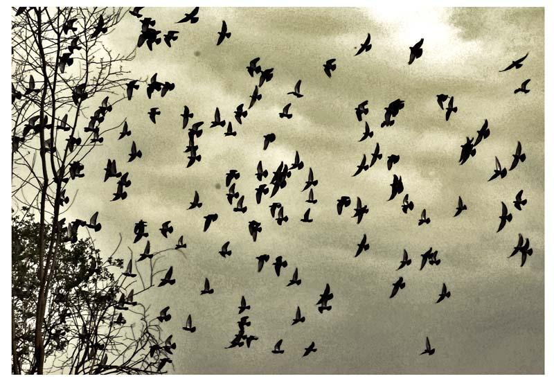 uccelli by Aglaja-hall
