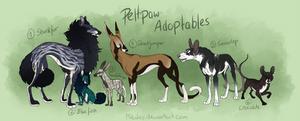 Adoptable - Peltpaw CLOSED