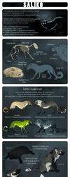 Saliko - Species Sheet by Mikaley