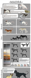Species Sheet - Madra by Mikaley