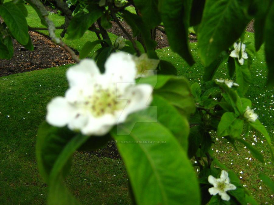 White Flower Tree by Eszies-Eszie