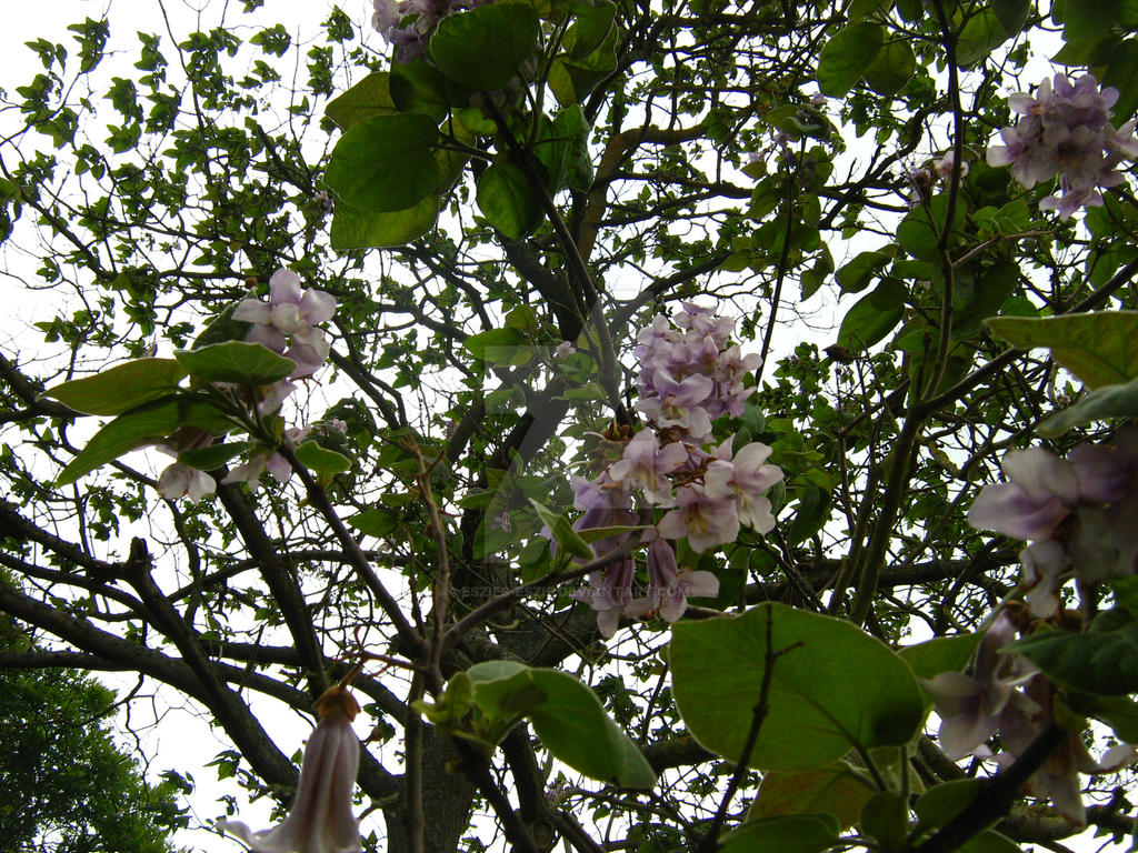 Purple Flower Tree by Eszies-Eszie