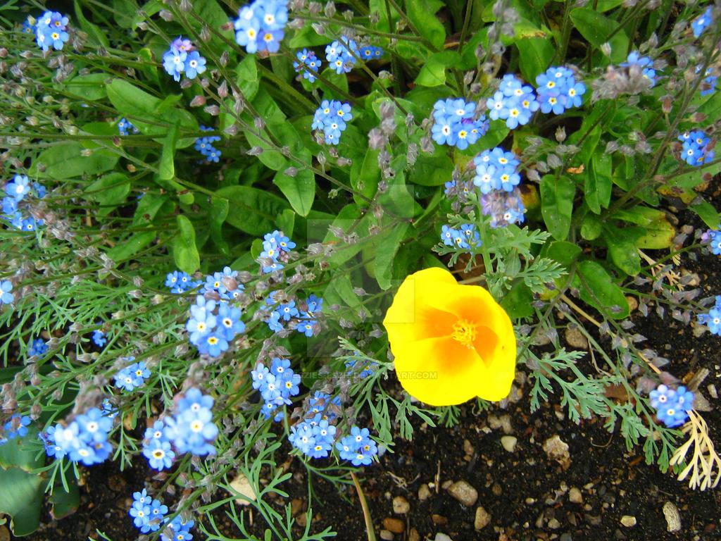 Little Yellow Flower by Eszies-Eszie
