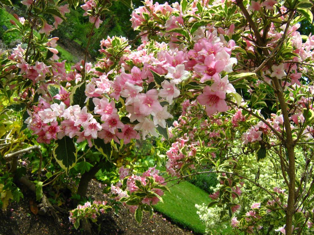 Pink Flower Tree by Eszies-Eszie