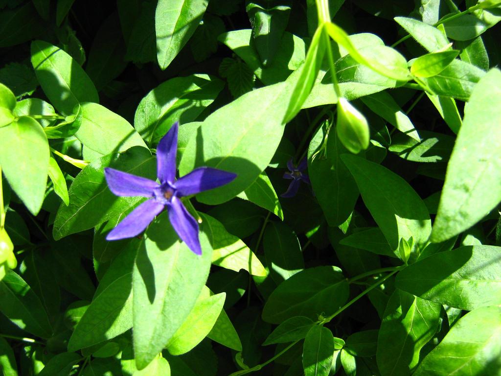 A lonely Purple Flower by Eszies-Eszie