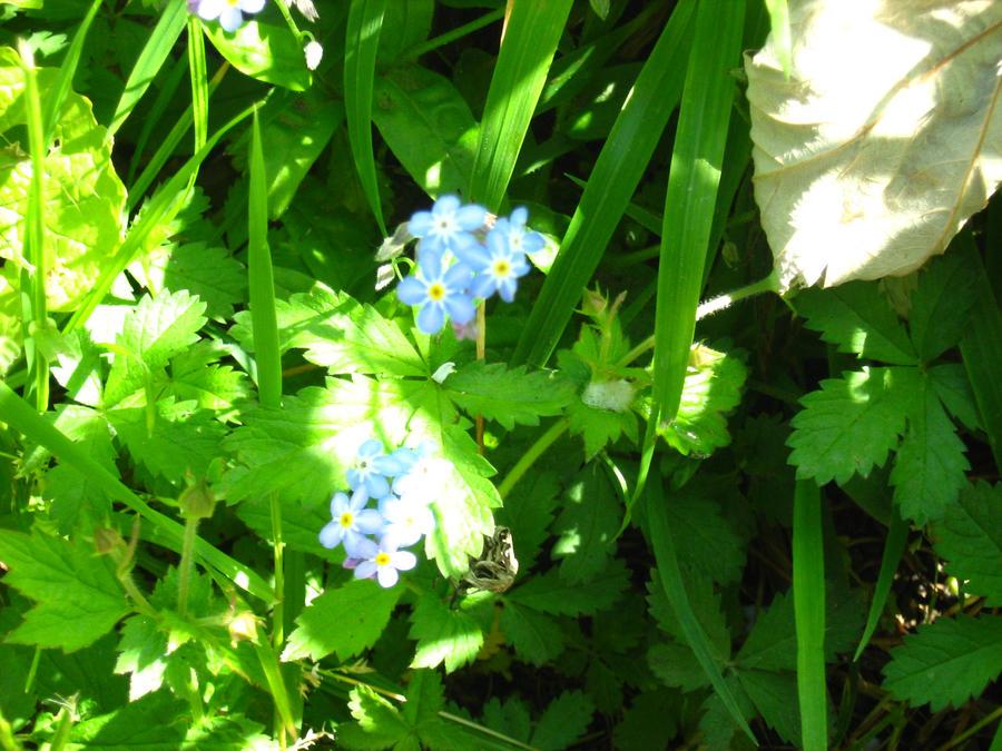 Blue little flowers by Eszies-Eszie