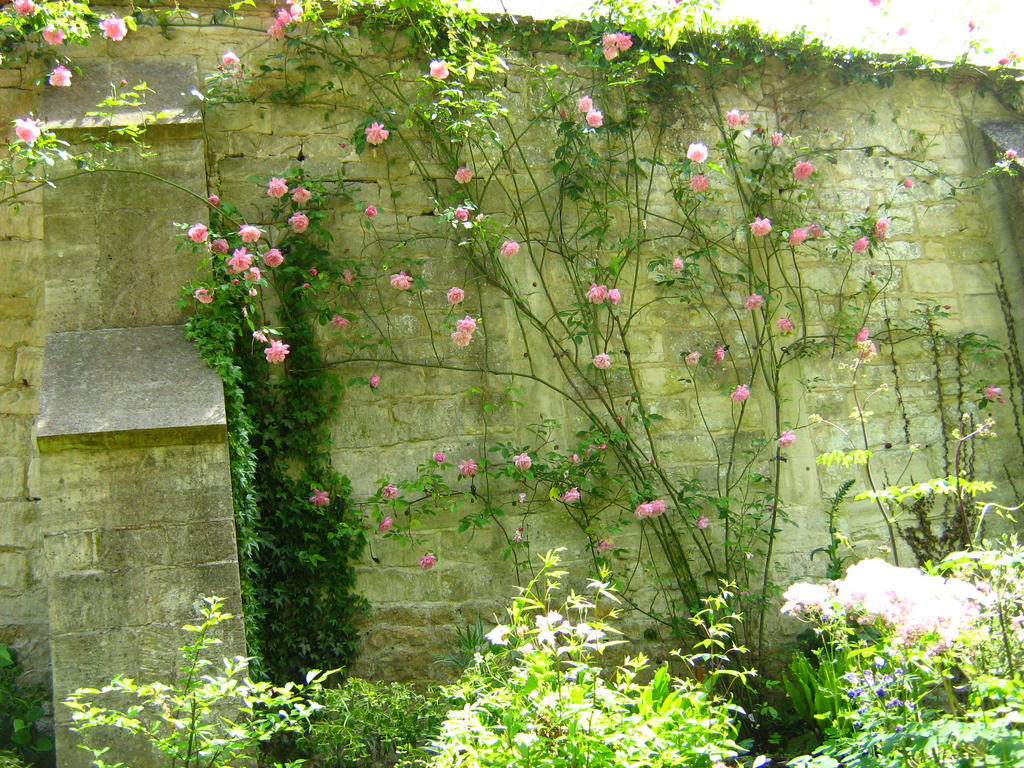 Rose Wall by Eszies-Eszie