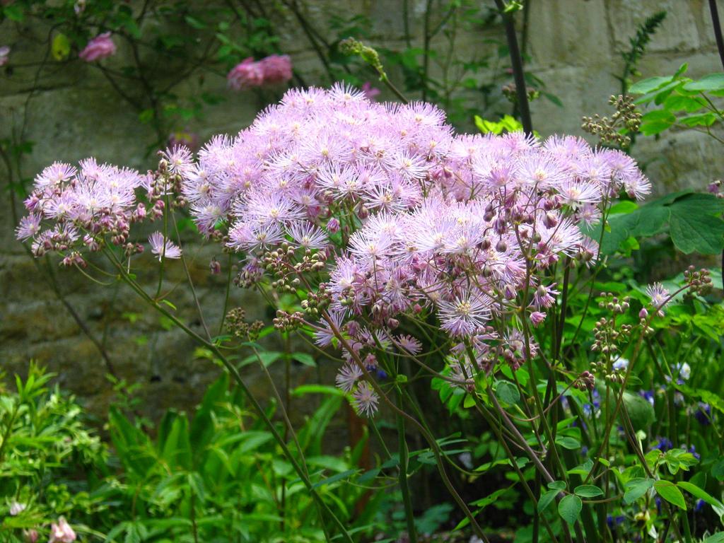 Painswick Rococo Garden by Eszies-Eszie