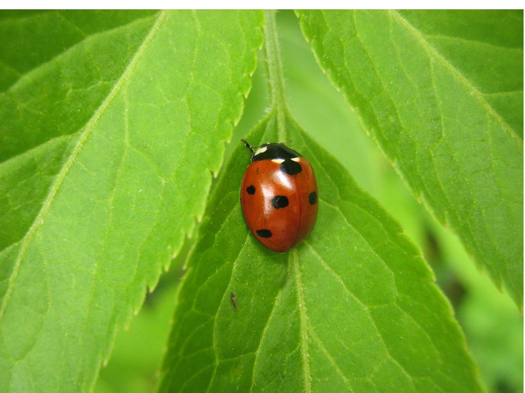 Ladybird by Eszies-Eszie