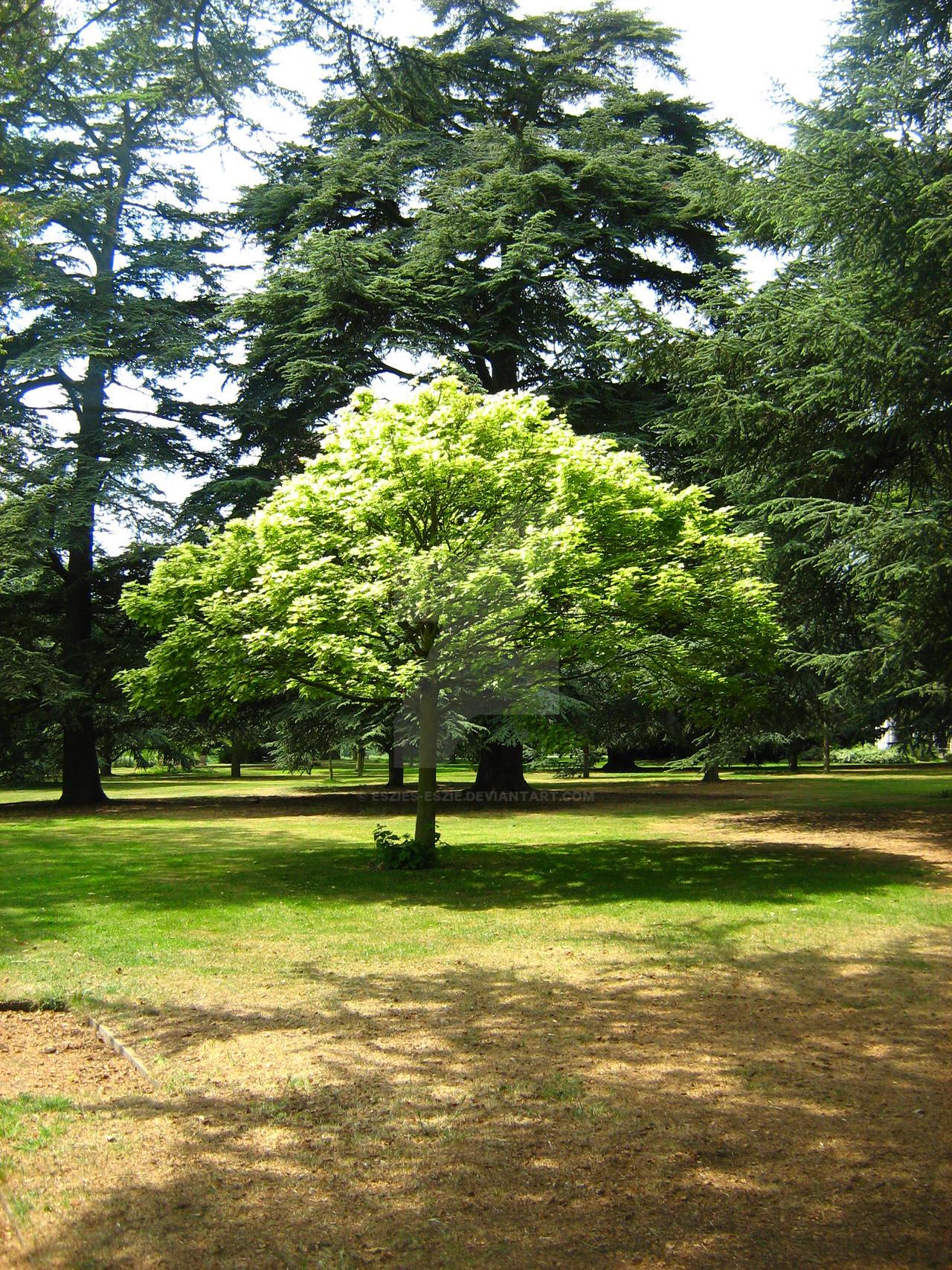Little Green Tree by Eszies-Eszie