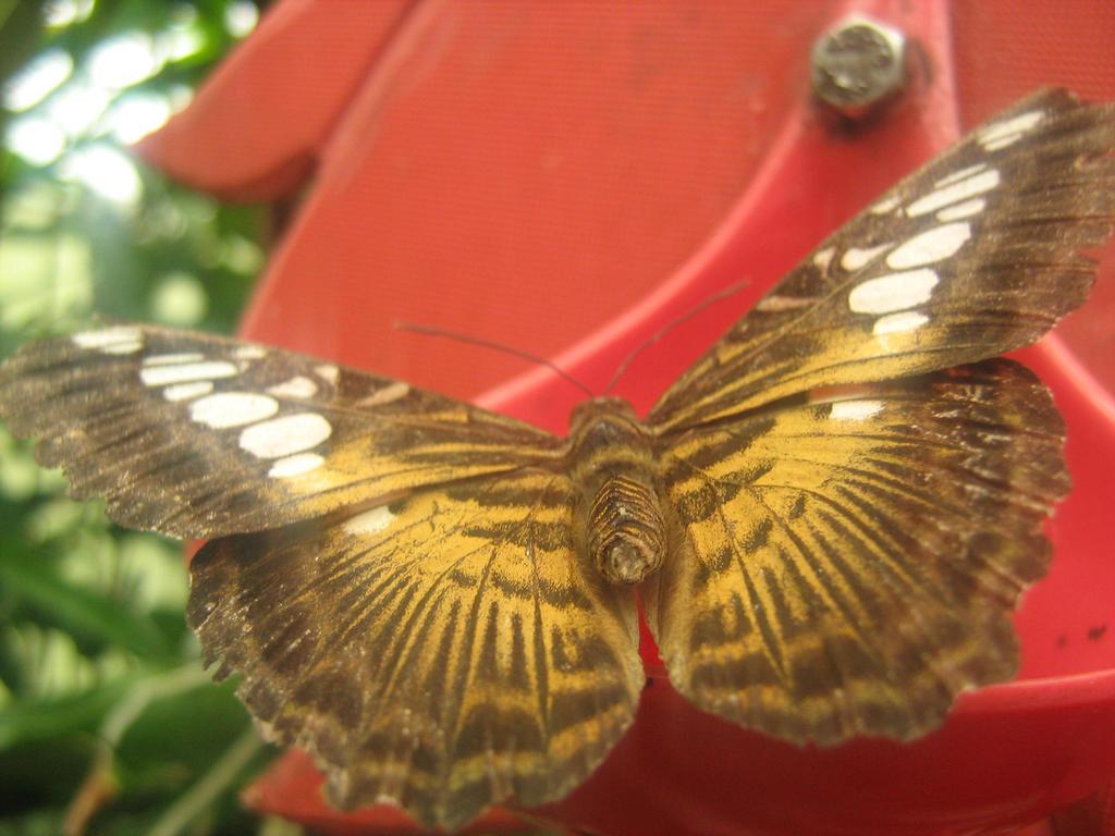 Butterfly 1 by Eszies-Eszie